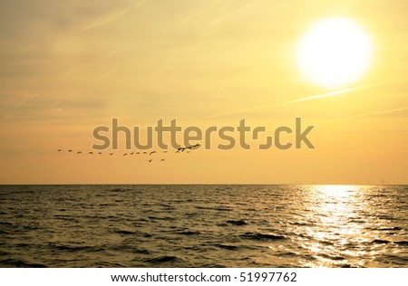 Sunrise at North Sea.  Flock of birds.  Visible corona of the sun.