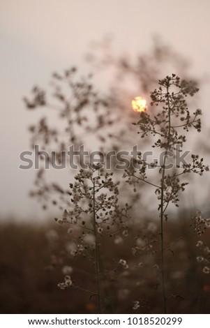 sunrise behind flower #1018520299