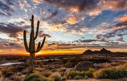Sunrise cactus sky clouds landscape. Cactus sunrise. Cactus in sunrise. Cactus at sunrise