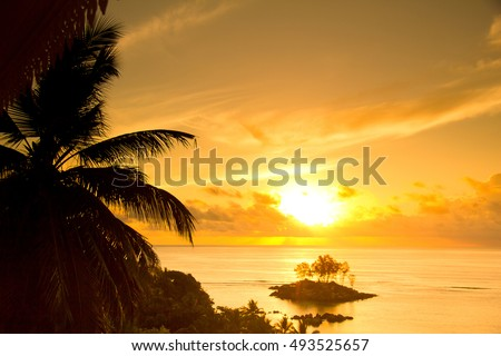 Sunrise Divine Coconut Horizon  #493525657