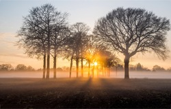 Sunrise field fog in morning. Forest tree mist landscape
