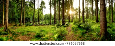 Stock Photo Sunrise in a beautiful forest in Germany