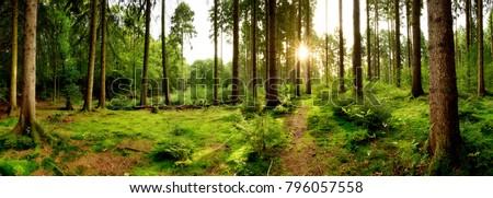 sunrise in a beautiful forest...