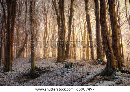 sunrise in a beautiful forest with frozen trees in winter
