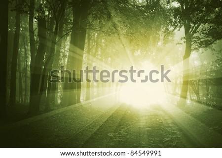 sunrise in a dark forest