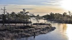 Sunrise in a frozen swamps landscape in Kemeri National Park in Latvia. Wintry image.