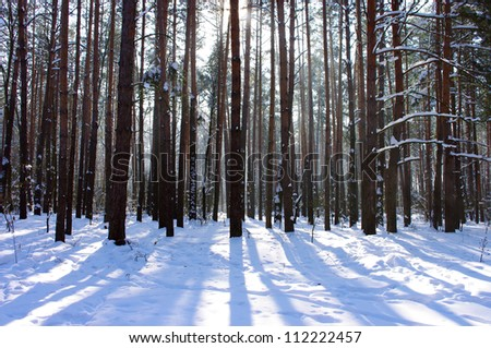 Sunrise in a winter forest.