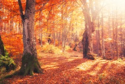 Sunrise in autumn forest. Bright golden fall nature landscape