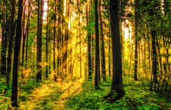 Sunrise in autumn forest on tree background