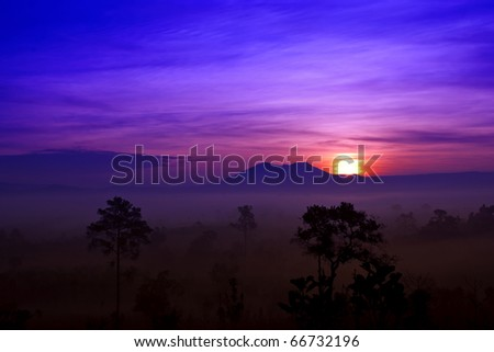 Sunrise in fog's forest
