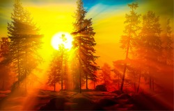 Sunrise in forest landscape. Winter trees at dawn
