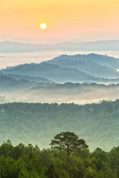 Sunrise in highlands of Dalat when sun rises pink circle below dew covered pine trees and a pine tree leaning his loneliness symmetry with sun creating beauty in countryside dawn plateau