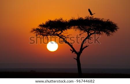 Sunrise in Kenya's Masai Mara Reserve