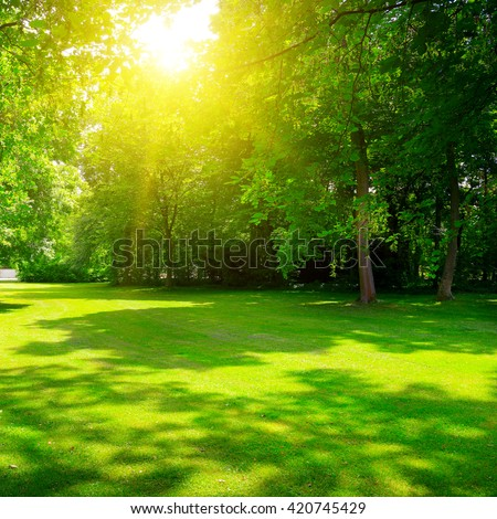 Sunrise in summer beautiful park