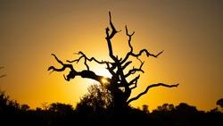 sunrise in the african bushveld