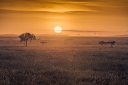Sunrise in the african savannah, Serengeti National Park