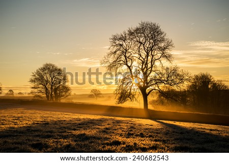 Sunrise in the fields at pengover green, cornwall, uk with beautiful tree silhouette