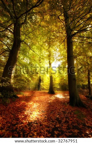 Sunrise in the forest in autumn