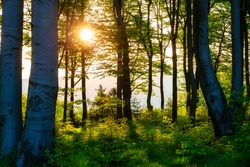 Sunrise in the forest of the Silesian Beskids. Poland