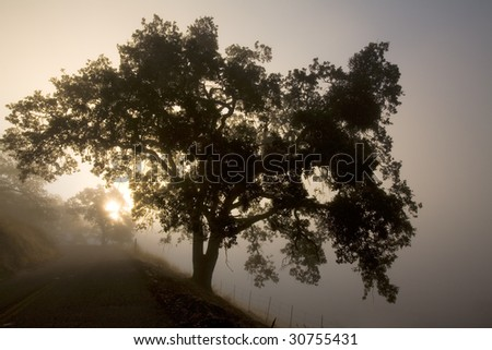 Sunrise in the Mist on a Winding Country Road