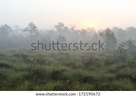Sunrise in the misty bog