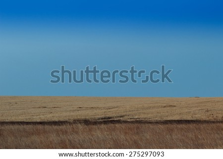 Sunrise in the steppes. Blue sky, yellow grass. #275297093