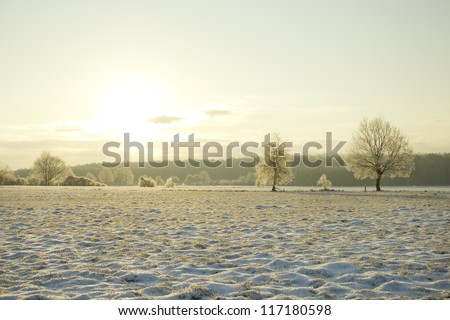 sunrise in the winter landscape with trees on the wide field