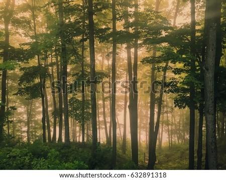 Sunrise In The Woods #632891318