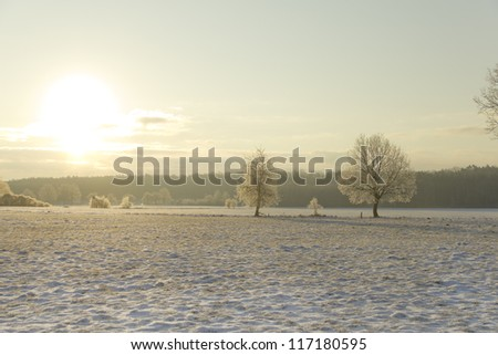 sunrise in winter-wonderland, snow landscape with trees