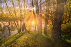 Sunrise near a pond with birches on the shore and fog over the water on a spring morning. Sun rays breaking through birch trees.