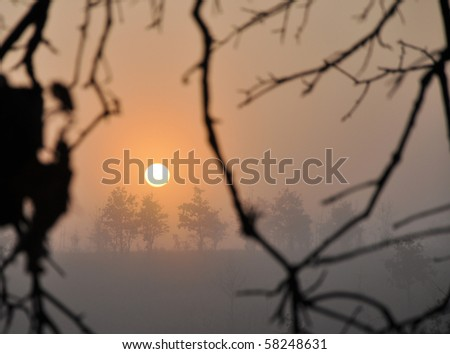 Sunrise on a heavily foggy winter morning through trees