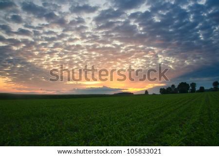 Sunrise on corn field