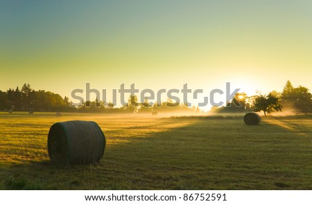 Sunrise on foggy field
