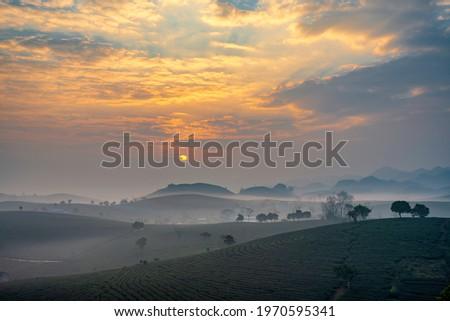Sunrise on Moc Chau tea hill, Moc Chau village, Son La province, Vietnam Zdjęcia stock ©