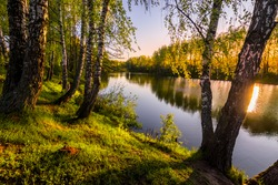 Sunrise or sunset among birches with young leaves near a pond, reflected in the water covered with fog. The sun shining through the branches of trees.