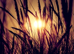 sunrise or sunset on beach dune breeze in grass at get-away travel destination peaceful and calm golden hour