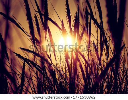 sunrise or sunset on beach dune breeze in grass at get-away travel destination peaceful and calm golden hour ストックフォト ©