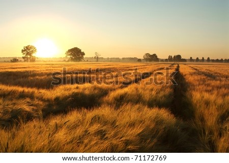Sunrise over a field of grain with dirt road leading toward the horizon.