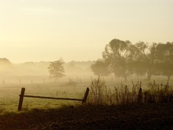 Sunrise over a field with trees and fog floating above the ground. Photo taken in October.