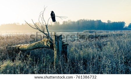 Shutterstock Sunrise over a misty pond with broken tree trunk and raven. Morning grass on the shore of lake and sunshine over the water.