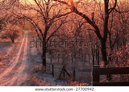 Sunrise over a snowy tree arched road just after an ice storm. Each branch has thousands of little icicles with pink light sparkling through.
