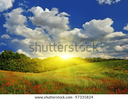 Sunrise over a spring meadow with red poppies against a blue sky. Spring landscape.