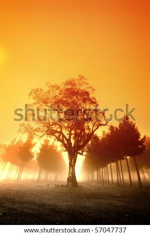 Sunrise Over Australian Forest