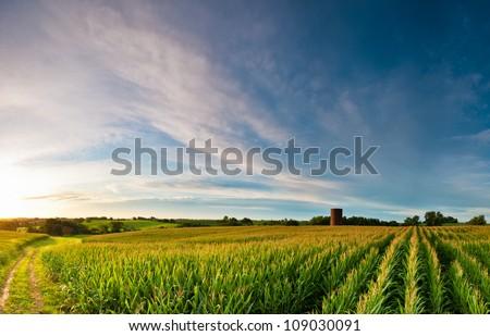 Sunrise over corn field with silo