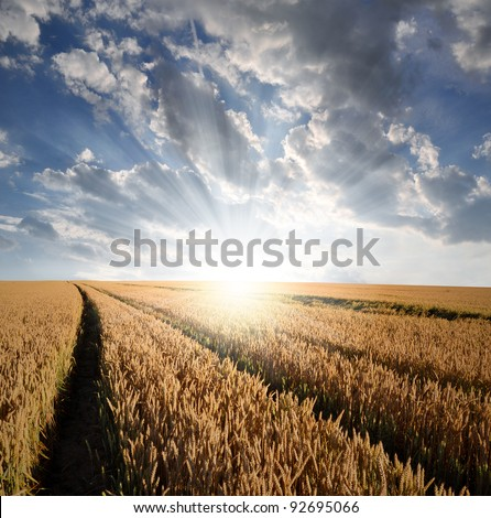 sunrise over fields #92695066