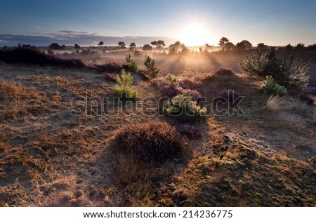 sunrise over heather meadows in summer morning
