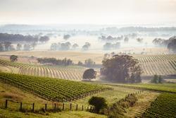 Sunrise over Hunter Valley vineyards