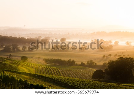Sunrise over Hunter Valley vineyards