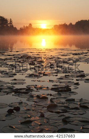 Sunrise over Lake with Lily Pads