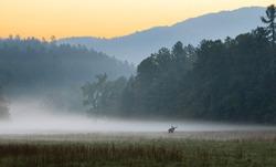 Sunrise over misty meadow with male bull elk grazing.